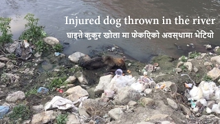 Injured dog thrown in the river