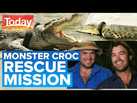 How to save a 4m croc with a tyre stuck on its head   Today Show Australia