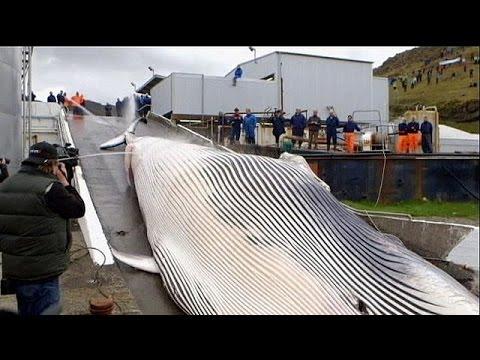 Άλλη μια …τρύπα στο νερό στη μάχη κατά της φαλαινοθηρίας