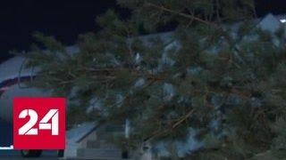 На авиабазу Хмеймим приехала новогодняя елка от Совета Федерации