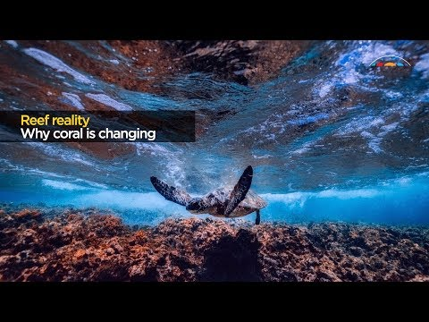 Reef reality: why coral is changing