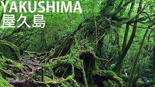 Yakushima Japan  city photos : Yakushima 屋久島 hiking (Princess Mononoke forest) - Exploring Japan with Wageofsins!
