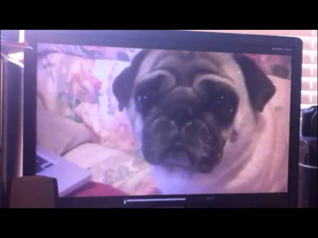 Paranormal Pugtivity