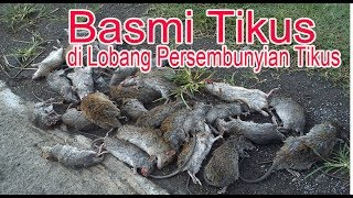 Download Video Cara Basmi Tikus di Lobang Persembunyian Tikus MP3 3GP MP4