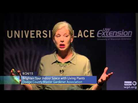 WPT University Place: Brighten Your Indoor Space with Living Plants