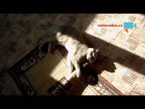 Matýsek a jeho koberec