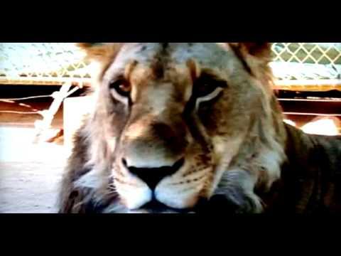 Thumbnail for video -mzB_D0Sdg4