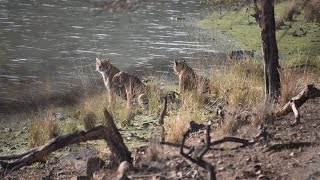 Ranthambore India  city photos : 2015 Trip - Tiger Reserve - Rathambore National Park - Rajasthan, India