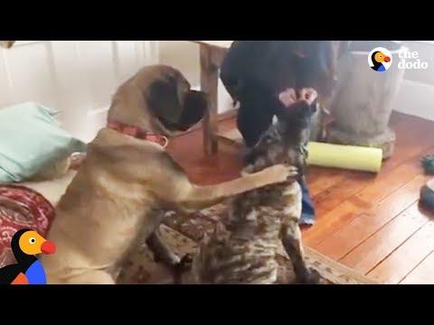 cane-insegna-al-suo-fratellino-come-sedersi