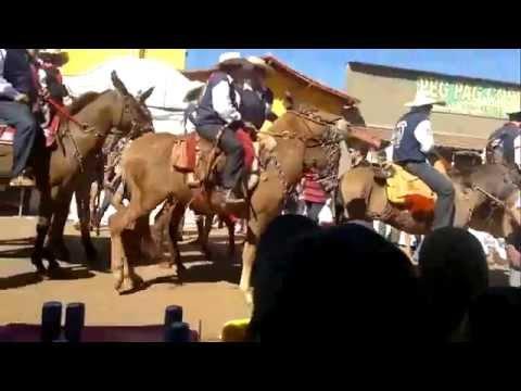 Guarinos  chegada dos cavaleiros de pilar de góias.