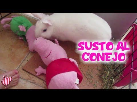 Peppa Pig y Bebé Humano dan un susto al conejo y se escapa  Vídeos de Peppa Pig en español