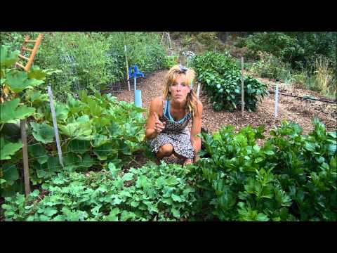 How To Be Successful With Organic Gardening