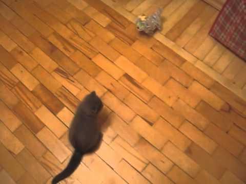 貓星人:狗狗你再吵就踹死你!