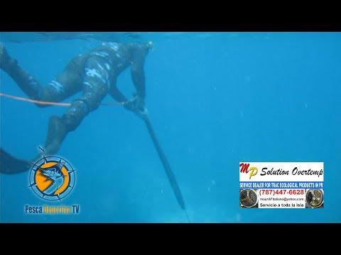 pesca con arpon - Pesca Deportiva TV / Wapa 2 Deportes / Pesca en Arpón Dic.11.13 / Programa # 4 Otra Producción de Bless Entertainment Inc. Si desea anuciarte en nuestro prog...