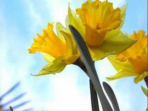 Malia feat. Eric Truffaz - Yellow Daffodils online metal music video by MALIA