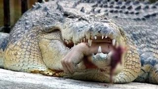 World's Scariest Alligators and Crocodiles by Epic Wildlife