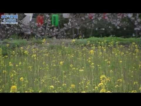 花とこいのぼりの競演 みたから公園