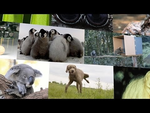 Top 10 cutest animal stories in science in 2014 – Nature video