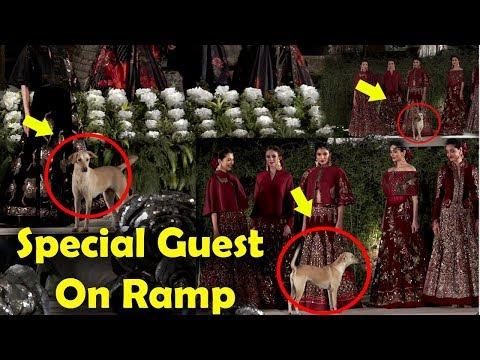 OMG 😱😱! DOG On Ramp At Blender Pride Fashion Tour 2019 #SidharthMalhotra