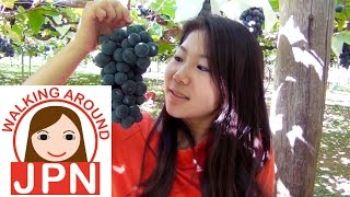 Yamanashi Japan  City new picture : Travel to Japan 2 'Picking Grapes in Yamanashi'