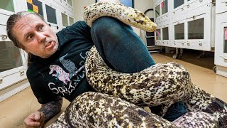 WORLDS LARGEST AND MOST COLORFUL SNAKES!!   BRIAN BARCZYK by Brian Barczyk