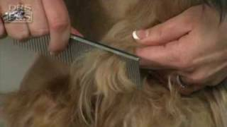 Dog Grooming: How To Remove Mats In Your Dog's Fur | DrsFosterSmith.com