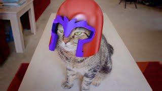 Magneto cat