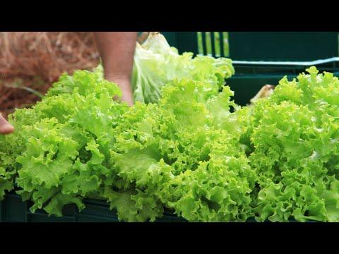 Programa de Aquisição de Alimentos em Cristal/RS - Parte 1