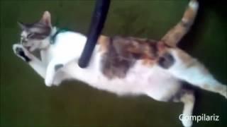 Подборка смешных видео про кошек, очень позитивные и забавные ролики.Обхохочешься!!!Ржака обоссака!кот и пескоты воителишотландские вислоухие котятаженщина кошкасмотреть кот в сапогах приколы с кошкамикот в сапогах картинкибританские кошкикотенокбелый коткошки видеоскачать кот в сапогах кот саймонавидео приколы про кошеккошки картинкисиамские кошкимультик кот в сапогахкот в сапогах смотреть бесплатнокот в сапогах в 3дигры про котятсибирская кошкаабиссинская кошкакошкаговорящий коткот леопольдфильм кот в сапогахвислоухие котятакошка сфинкскоты фотокошки против собакперсидские кошкиигры про кошекбританский котсмешные котышотландские котятакоты приколыЭтот ролик обработан в Видеоредакторе YouTube (http://www.youtube.com/editor)