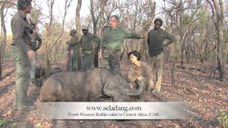 Video BUFFALO BUFFLE HUNTING (Chasse) in CENTRAL AFRICA  by Seladang MP3, 3GP, MP4, WEBM, AVI, FLV Agustus 2017
