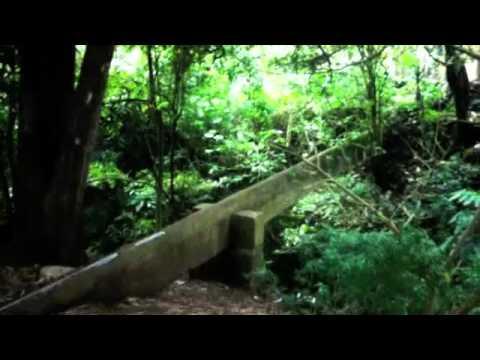 Jardineria Paisajista Puerto Rico Videos Videos