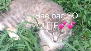 Bae bae being cute 😻