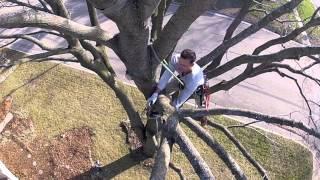 Video GoPro Tree-Climbing : Ground to Canopy MP3, 3GP, MP4, WEBM, AVI, FLV Desember 2017