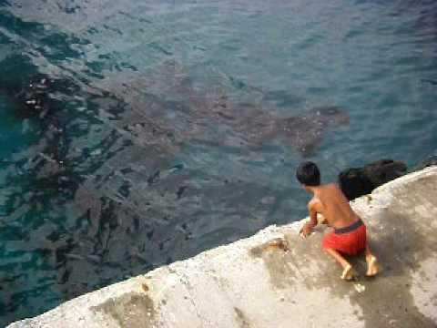 Megalodon Caught http://kiestu.com/videopage/on/Gd6CH6eCKIc.html