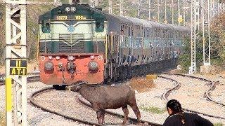 Video Crazy Buffalo STOPS the Train and escapes : Indian Railways MP3, 3GP, MP4, WEBM, AVI, FLV Juli 2017