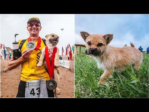 Σκύλος …δρομέας: Η ιστορία του Ντίον και του Γκόμπι