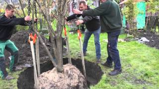 #594 Wie pflanze ich einen Grossbaum Teil 5v11 - Die Landung
