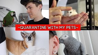A Day in Quarantine with my Pets by Tyler Rugge