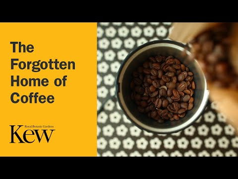 The Forgotten Home of Coffee