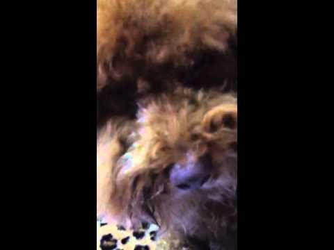 Qq 2014 2 (видео)