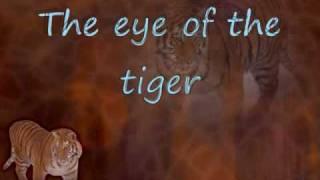 Video Eye of the Tiger ~ Survivor (Lyrics) FULL MP3, 3GP, MP4, WEBM, AVI, FLV Agustus 2018