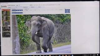 jumbo elephant photo id beta version demo