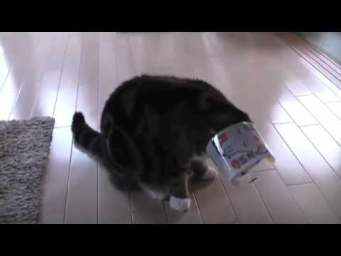 Приколы с котами.  Приколы с животными. Коты. ТОПовая подборка приколов. Смешные коты. Cat (видео)