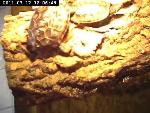 dreikiel wasserschildkröten1.avi