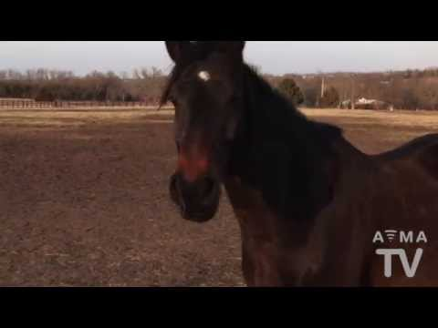 owning - There are a lot of things to consider when thinking about owning a horse. Veterinary care needs to be at the top of that list. Dr. Heather Case explains some...