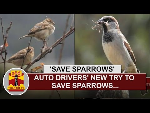 Auto-Drivers-New-try-to-save-Sparrows-at-Ooty-Special-News-Thanthi-TV