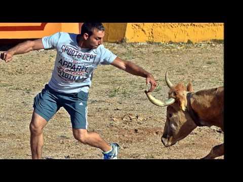 Tarde de Vacas Longares (Zaragoza) 9 de Mayo 2015