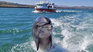 Dingle Ireland  City pictures : See Fungi the Dolphin in Dingle - Irish Bucket List (Ep #17)