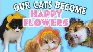 The saddest cat bouquet ever
