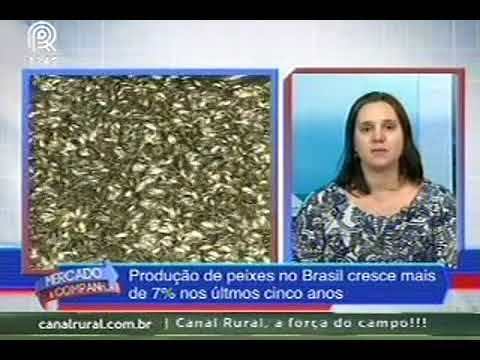 Criação de peixes cresce 7% em 5 anos no Brasil
